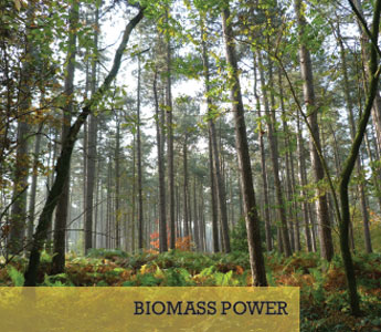 source-biomass